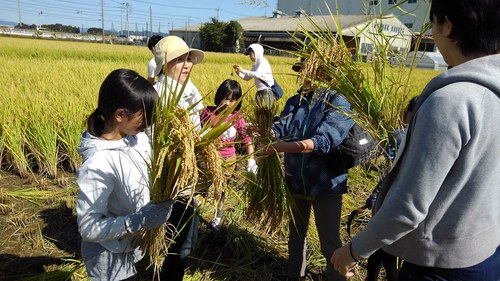 2018稲刈り2.JPG